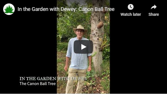 The Canon Ball Tree