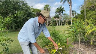 VIRPI: Virgin Islands Rare Plant Initiative
